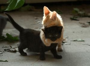 cute cats hug